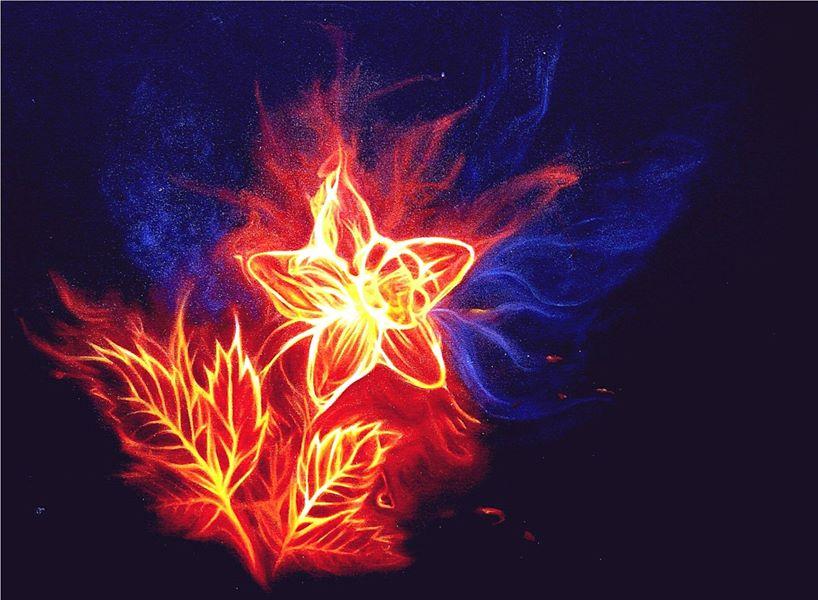 Кораловый цветок - говорим о Любви