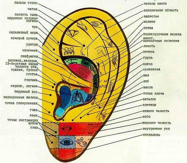 активные точки на ушах